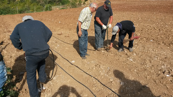 Serveis - Plantació de vinyes - agronec